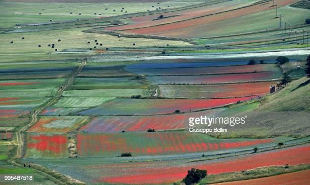 An aerial view during the annual blossom in Castelluccio on July 10, 2018 in Castelluccio di Norcia near Perugia, Italy.