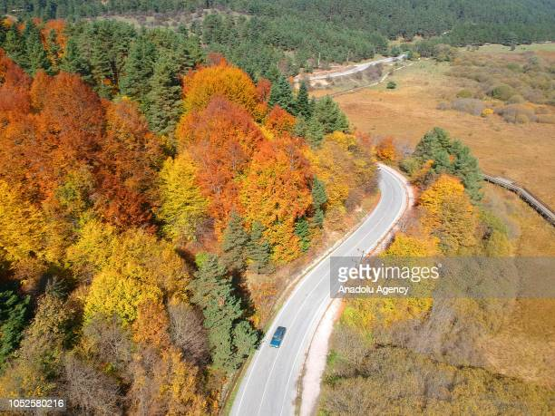 An aerial view of a car going on a road near trees with yellow orange and red colored leaves during autumn season in Bolu province of Turkey on...