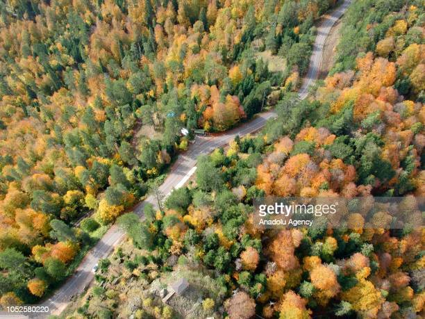 An aerial view of a road amid trees with yellow orange and red colored leaves during autumn season in Bolu province of Turkey on October 19 2018...