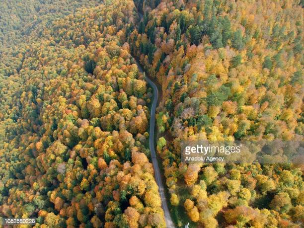 An aerial view of a road to the Yedigoller National Park amid trees with yellow orange and red colored leaves during autumn season in Bolu province...