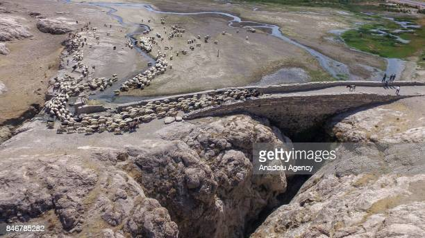 An aerial view of a sheep flock led by locals who built up a bridge as a levee with rocks on their own providing water retention in a single point in...