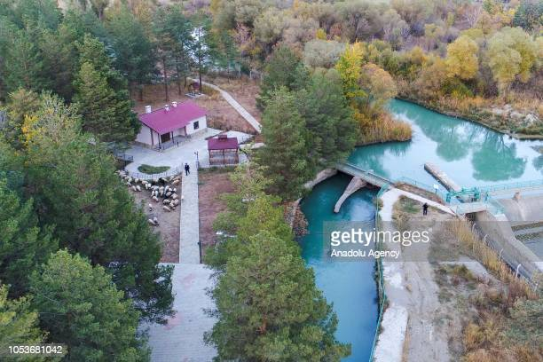 An aerial view of a shepherd herding sheep and a person standing between turquoise dam water amid colorful trees during autumn in Edremit district of...