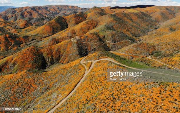 An aerial view of a 'super bloom' of wild poppies blanketing the hills of Walker Canyon on March 12 2019 near Lake Elsinore California Heavier than...