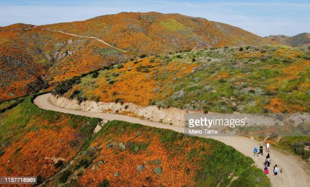 An aerial view of a 'super bloom' of wild poppies blanketing the hills on March 22 2019 near Lake Elsinore California Heavier than normal winter...