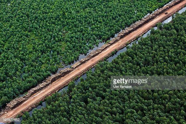An aerial view of Acacia plantations in Merang during an aerial tour of the Sumatran forest taken by Greenpeace and South Sumatra Governor Alex...