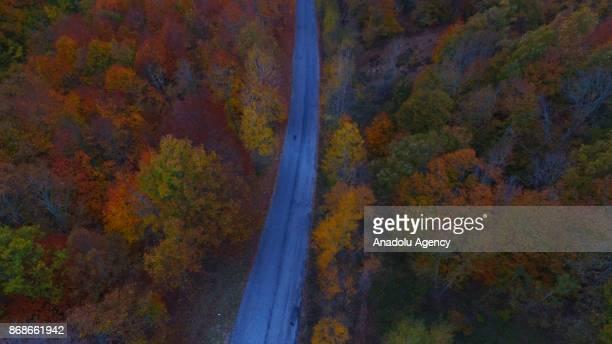 An aerial view of Igneada Floodplain Forests among greenish and yellowish trees during autumn season in Kirklareli Turkey on October 31 2017 The...