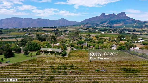 An aerial view of Ken Forrester Wines' Cabernet Sauvignon Old Vines vineyard The Country Guest House accommodation and the 96 Winery Road restaurant...