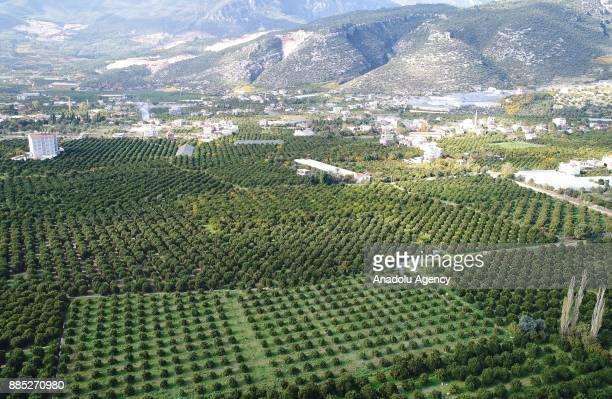 An aerial view of orange groves in Finike district of Antalya Turkey on November 30 2017 Orange harvest began 20 days ago expected to end in May with...