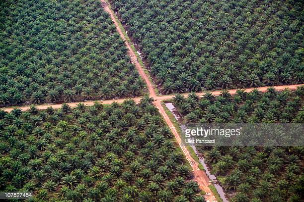An aerial view of palm oil plantations in Merang during an aerial tour of the Sumatran forest taken by Greenpeace and South Sumatra Governor Alex...