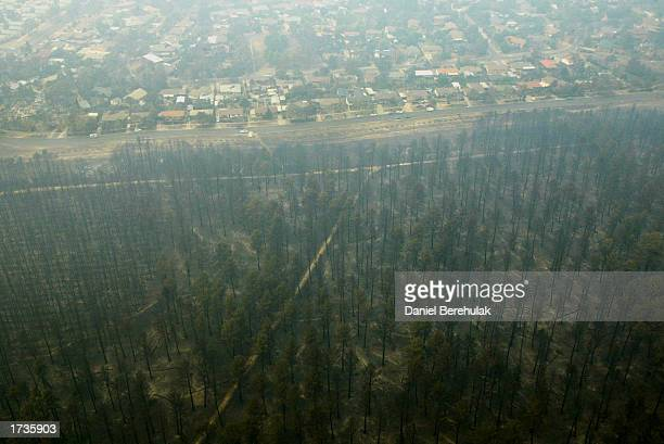 An aerial view of the fire devastated Stromlo forest in the suburb of Chapman on January 21 2003 in Canberra Australia Four people were killed and...