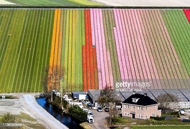 TOPSHOT An aerial view of the flower fields of the Keukenhof known as the Garden of Europe in Lisse southern Holland on April 10 2019 / Netherlands...