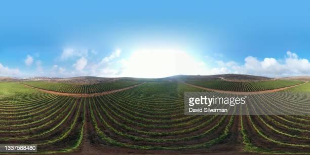 An aerial view of the Meshek Achiya vineyard on August 31, 2021 in the Israeli settlement of Esh Kodesh in the West Bank. Israeli wineries are...