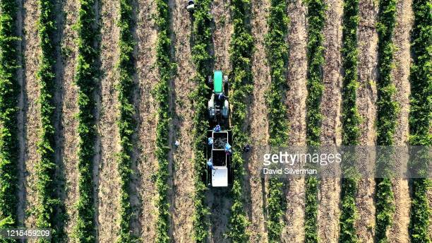 An aerial view of the Shiraz grape harvest at the Bosman Family Vineyards on the sustainably-farmed Lelienfontein estate on February 20, 2020 near...
