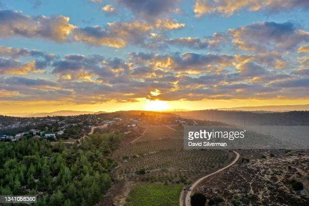 An aerial view of the sunrise over Seahorse Winery's vineyards during it's Grenache red wine grape harvest on a cool Autumn morning on September 17,...