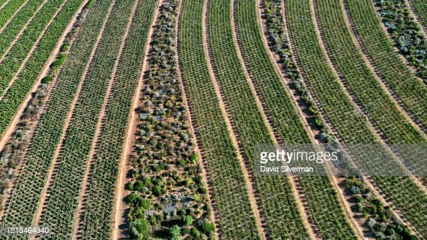 An aerial view of the sustainably-farmed vineyards at the Mullineux and Leeu Family Wines' Roundstone estate, where natural fynbos and other...