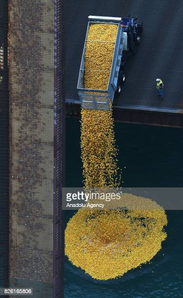 An aerial view of thousands of rubber ducks being dropped into Chicago River within the 12th Windy City Rubber Ducky Derby in Chicago United States...