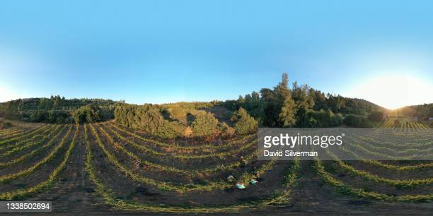 An aerial view of workers harvesting Cabernet Sauvignon red wine grapes in the cool evening hours on September 4, 2021 in Moshav Givat Yearim in the...