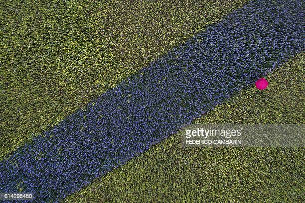 An aerial view shows a stroller walking with a pink umbrella in a field with blue and yellow plants in Cologne, western Germany, on October 13, 2016....