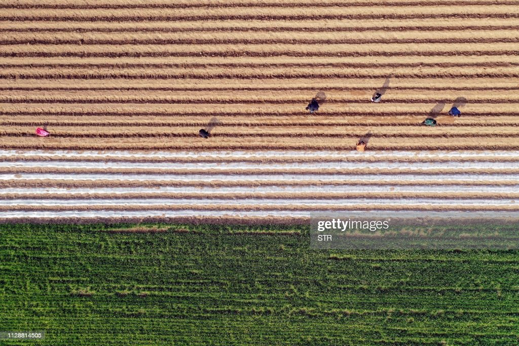 CHINA-AGRICULTURE : News Photo