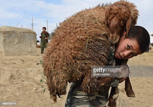 An Afghan boy carries a sheep on his shoulder at a livestock market ahead of the sacrificial Eid alAdha festival in Kabul on Septmber 22 2015 Muslims...