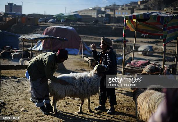 An Afghan child plays with the wool of a sheep as another brushes the fleece of the animal at a market in the outskirts of Kabul on December 28 2013...