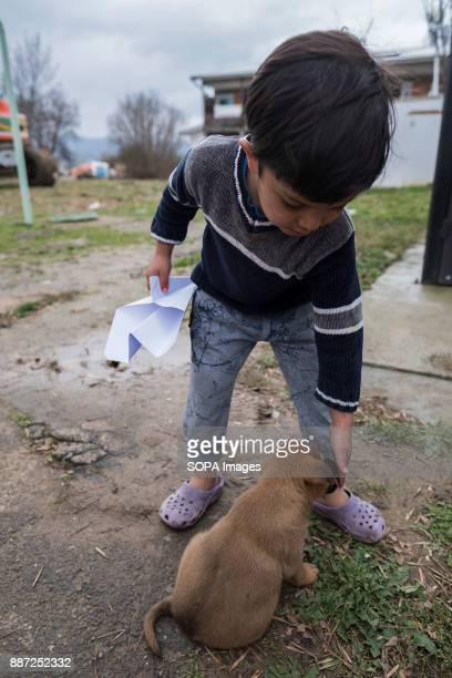 An Afghan child refugee plays with a puppy in a Serbian refugee camp With Hungary and Croatia stopping refugees crossing the borders into the EU many...