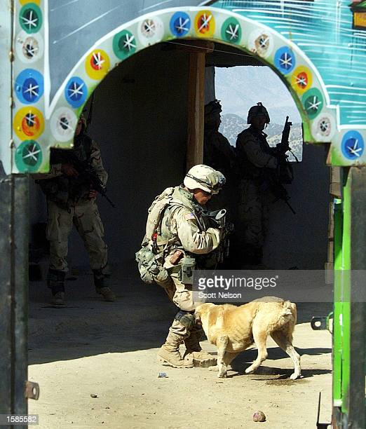 An Afghan dog tries to bite a soldier from the U.S. Army 82nd Airborne as his squad conducts a sweep of homes November 2, 2002 in the village of...