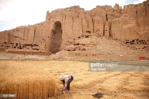 An Afghan farmer harvests wheat near the ruins of the ancient budha statues that once stood on July 30 2010 in the central Afghan province of Bamiyan...