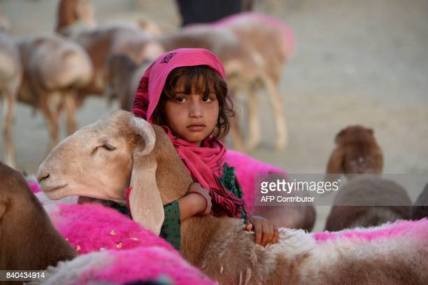 An Afghan girl holds a sheep as she waits for customers at a livestock market ahead of the Eid alAdha Muslim festival on the outskirts of Jalalabad...