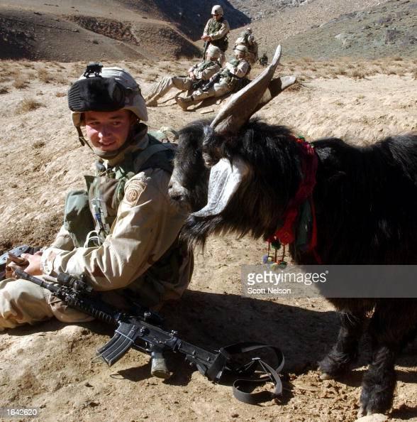 An Afghan goat watches as U S  Army 82nd Airborne PFC Matt