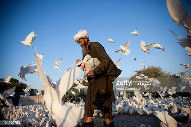An Afghan man feeds pigeons at the Blue Mosque after praying a day before the parliamentary election September 17 2010 in Mazaresharif Afghanistan...