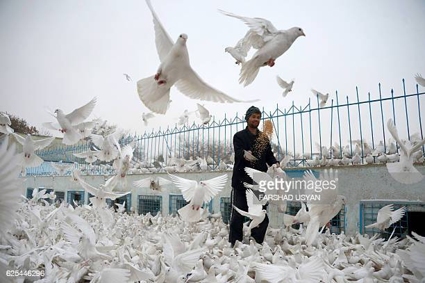 TOPSHOT An Afghan man feeds pigeons in the courtyard of the the famous Blue Mosque in Mazarisharif on Nov 24 2016 / AFP / Farshad USYAN