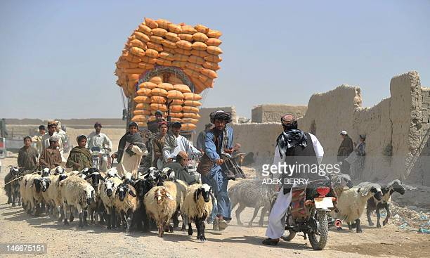 An Afghan man herds sheep in a market while US Marines from Kilo Company of the 3rd Battalion 8th Marines Regiment conduct a patrol in Garmser...