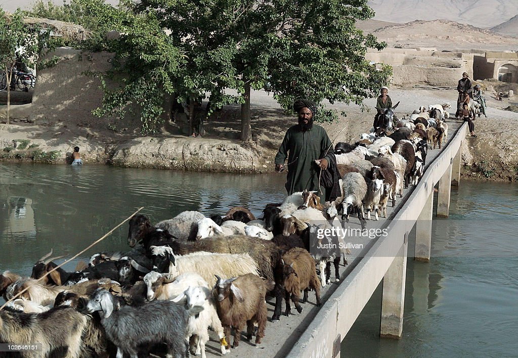 An Afghan man moves goats across a bridge as a U S  Army convoy with