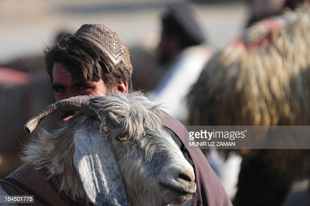 An Afghan man waits for customers at an animal market on the outskirts of Kabul on October 21 ahead of the Muslim feast of Eid alAdha Eid alAdha is...