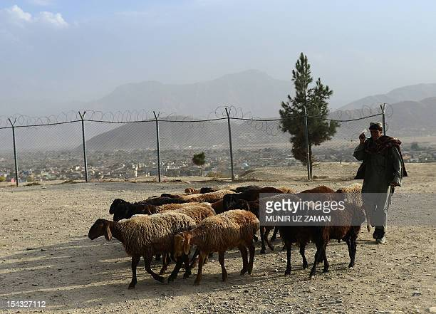 An Afghan man walks with his sheeps near the tomb of Nadir Khan in Kabul on October 18 2012 Over a third of Afghans are living in abject poverty as...