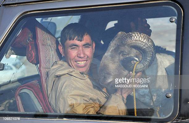 An Afghan man with his ram smiles through a car window as he leaves a ramfighting game on the outskirts of northern Kabul on February 18 2011 The...