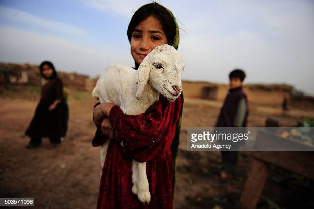An Afghan refugee girl holds a lamb on her arms on a field in Islamabad Pakistan on January 6 2016 Hundreds of thousands of Afghan refugees still...