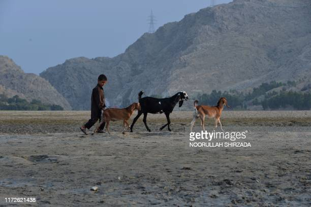 An Afghan shepherd boy walks with his goats on the outskirts of Jalalabad on September 30, 2019.