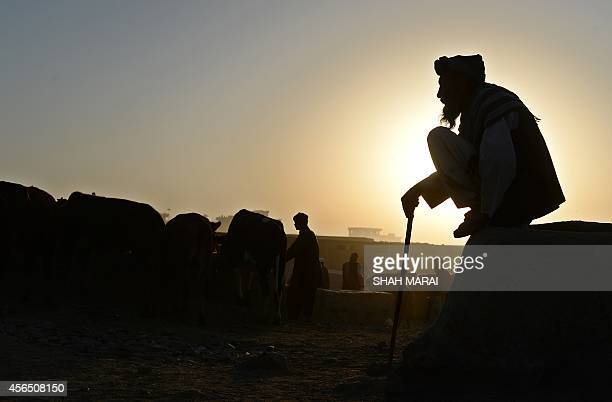 An Afghan trader waits for customers early in the morning at a livestock market ahead of the sacrificial Eid alAdha festival in Kabul on October 2...