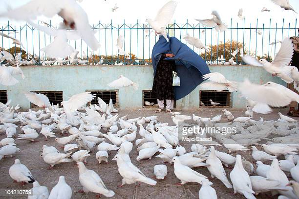 An Afghan woman is surrounded by pigeons at the Blue Mosque a day before the parliamentary election September 17 2010 in Mazaresharif Afghanistan...