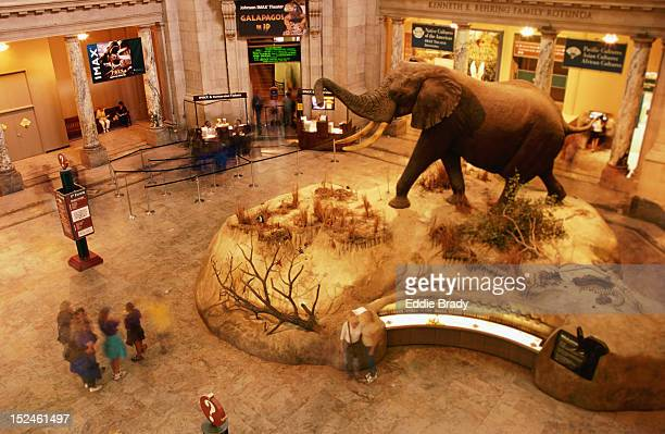 An African bull elephant greets visitors in the rotunda of the SmithsonianÆs National Museum of Natural History.