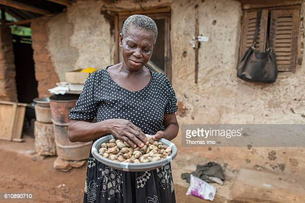 An African farmer on her cashew farm In her hands she holds a bowl with harvested cashew nuts on September 06 2016 in Congo Ghana