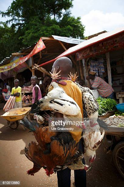 An African man carries slaughtered chickens over the market in Niamey on August 10 2016 in Niamey Niger