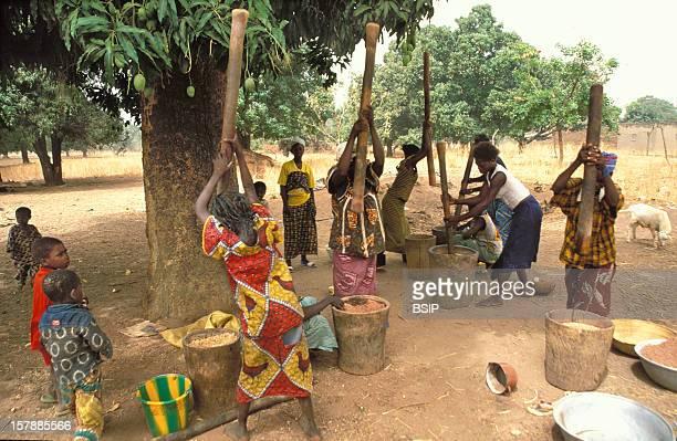 An African Scene Woman Belonging To The Djula And Barro EthnosDjiri Village Burkina Faso