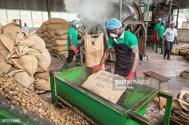 An African worker of the MIM cashew processing company empties a sack of cashew nuts in an engine on September 07, 2016 in Mim, Ghana.