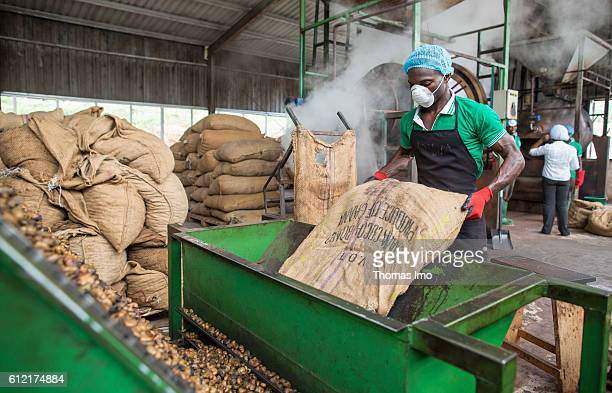 An African worker of the MIM cashew processing company empties a sack of cashew nuts in an engine on September 07 2016 in Mim Ghana
