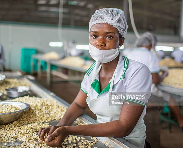 An African worker of the MIM cashew processing company is sorting cashew nuts on September 07 2016 in Mim Ghana