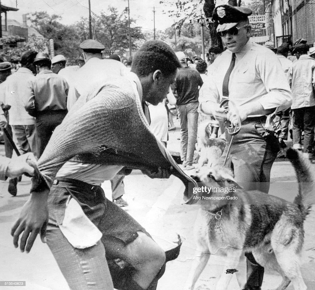 African-American protesters being attacked by police dog in a street during segregation demonstrations, Birmingham, Alabama, May 4, 1963.
