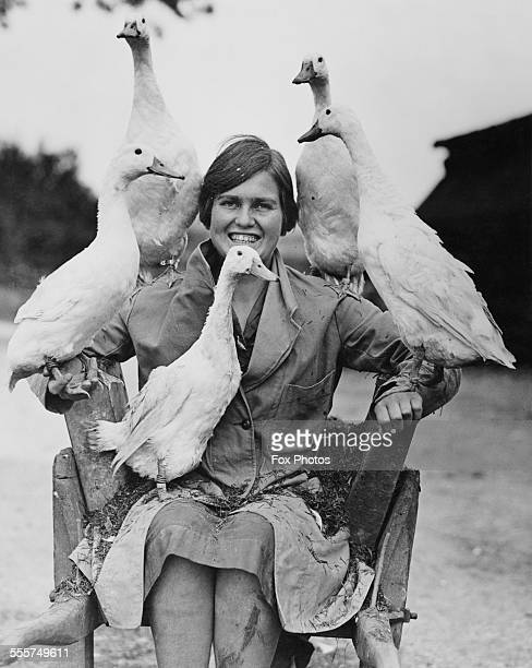 An agriculture student sitting in a wheelbarrow with five white Indian Runner ducks on Mrs Harrison Bell's poultry farm near Welwyn Hertfordshire...